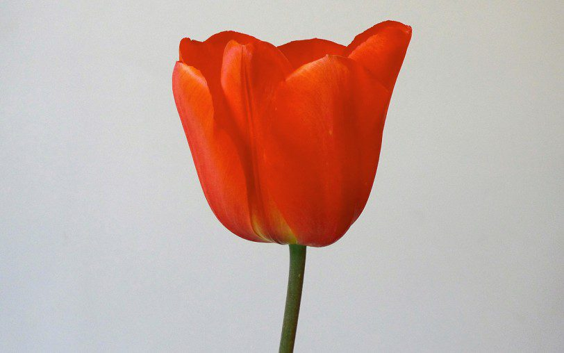 L1230858(Orange_Sun)