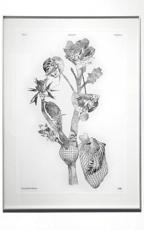 07_Marcin_Rusak_Botanical_Drawing_2