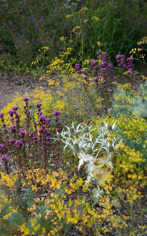 Gravel planting at Hillside. Designer: Dan Pearson