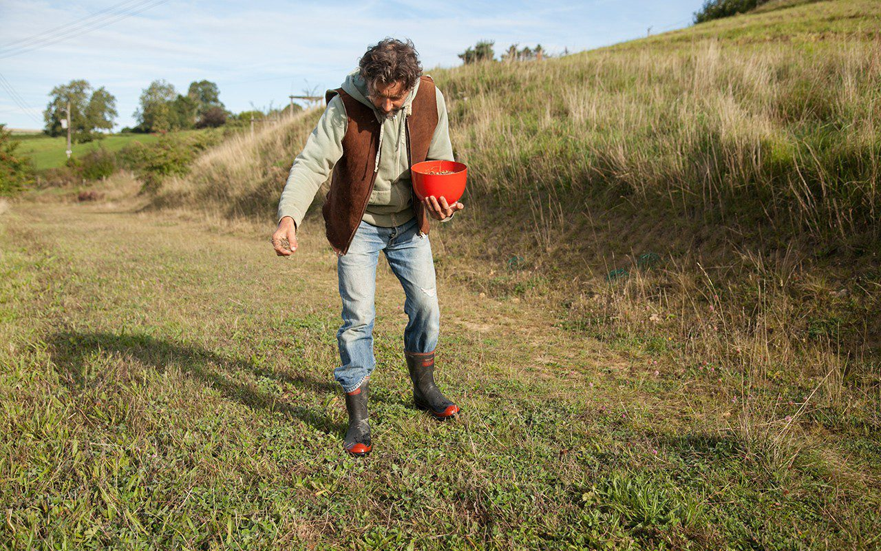 Over-sowing meadow seed