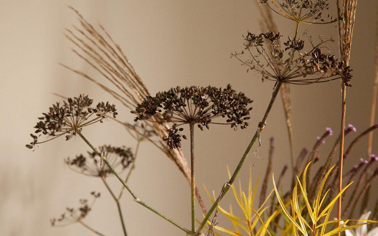 Foeniculum vulgare 'Purpureum', Miscanthus sinensis 'Dronning Ingrid' and Amsonia hubrichtii