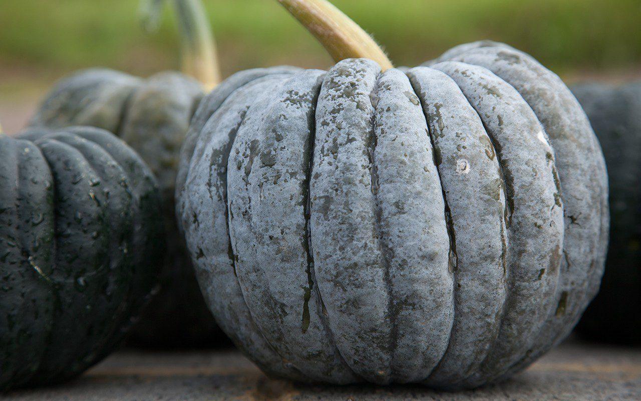 Pumpkin 'Black Futsu'