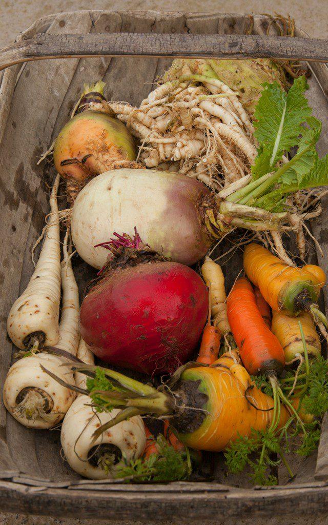 Winter root vegetables - beetroot, parsnips, carrots, turnip swede and celeriac