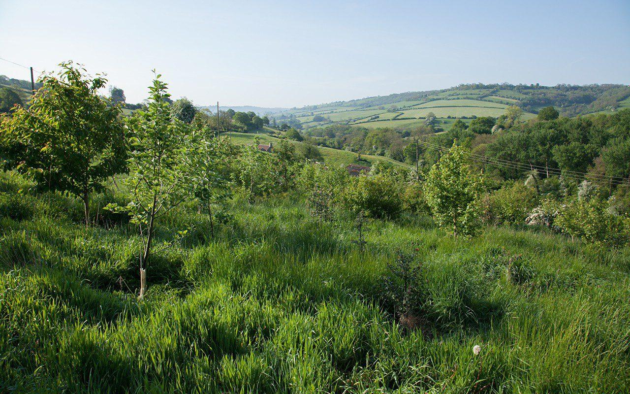 Dan Pearson's Blossom Wood in 2014
