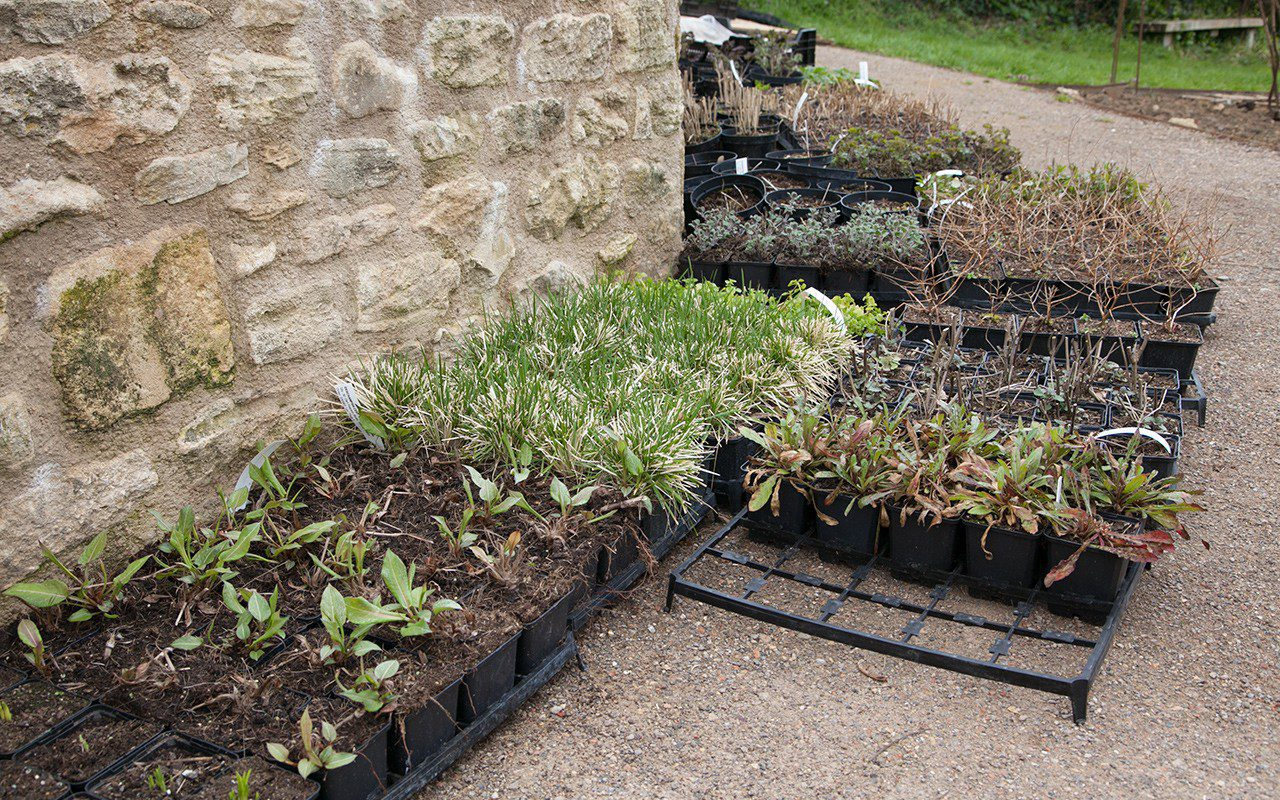 Plants for Dan Pearson's new garden in Somerset