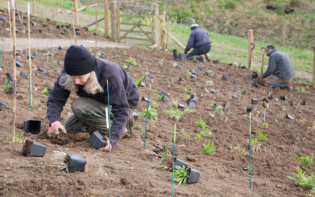 Jacky Mills planting up Dan Pearson's Somerset garden
