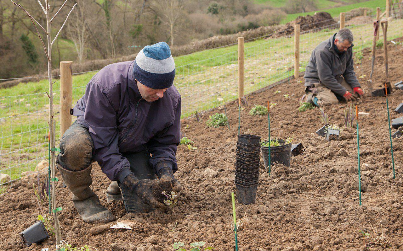 Ray Pemberton planting up Dan Pearson's Somerset garden