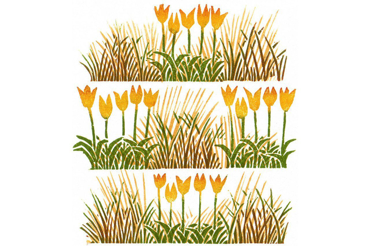 Tulips by Clare Melinsky