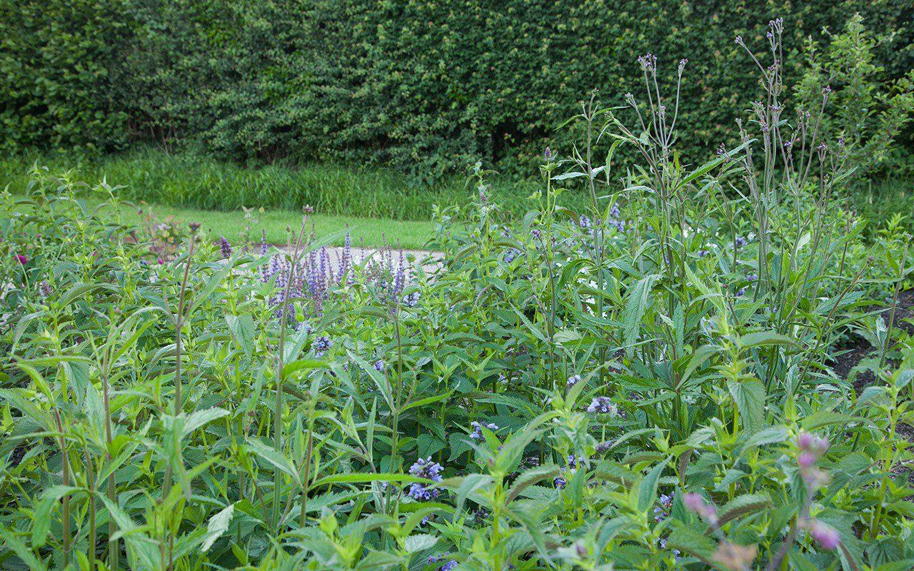 Dan Pearson's Somerset garden June 2017