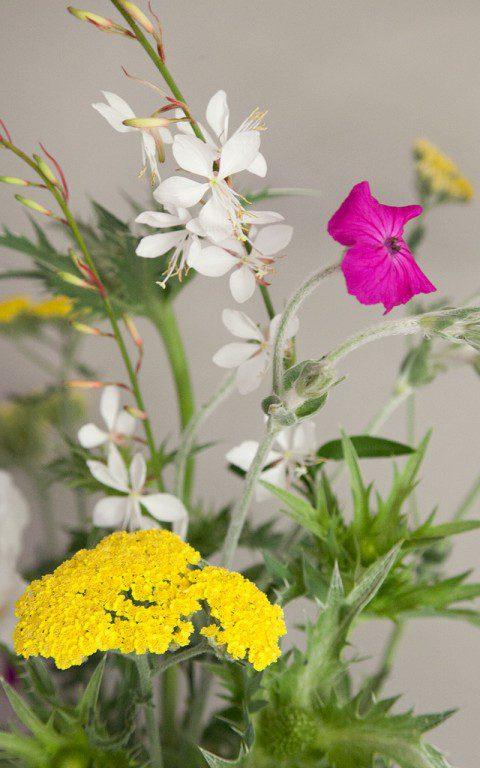 Achillea 'Moonshine', Lychnis coronaria & Gaura lindheimerei