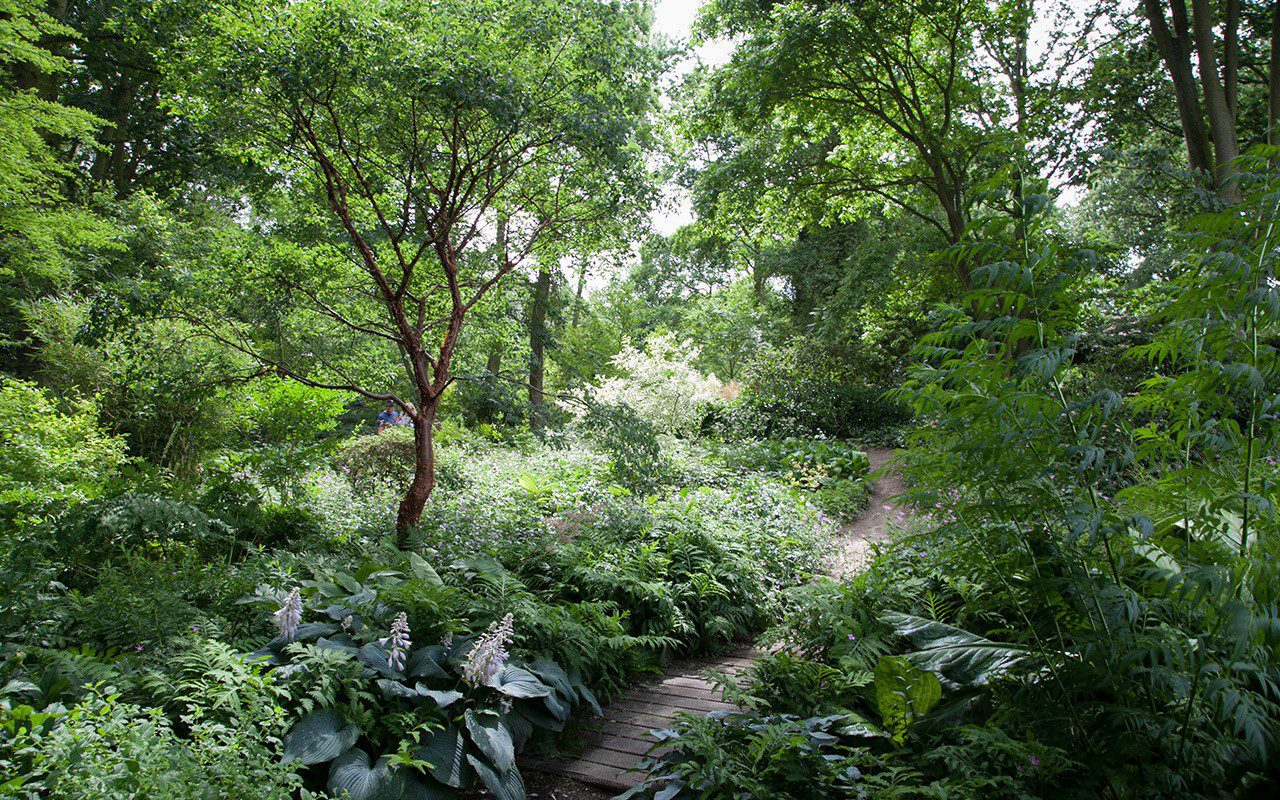 The Woodland Garden at The Beth Chatto Gardens. Photo: Huw Morgan