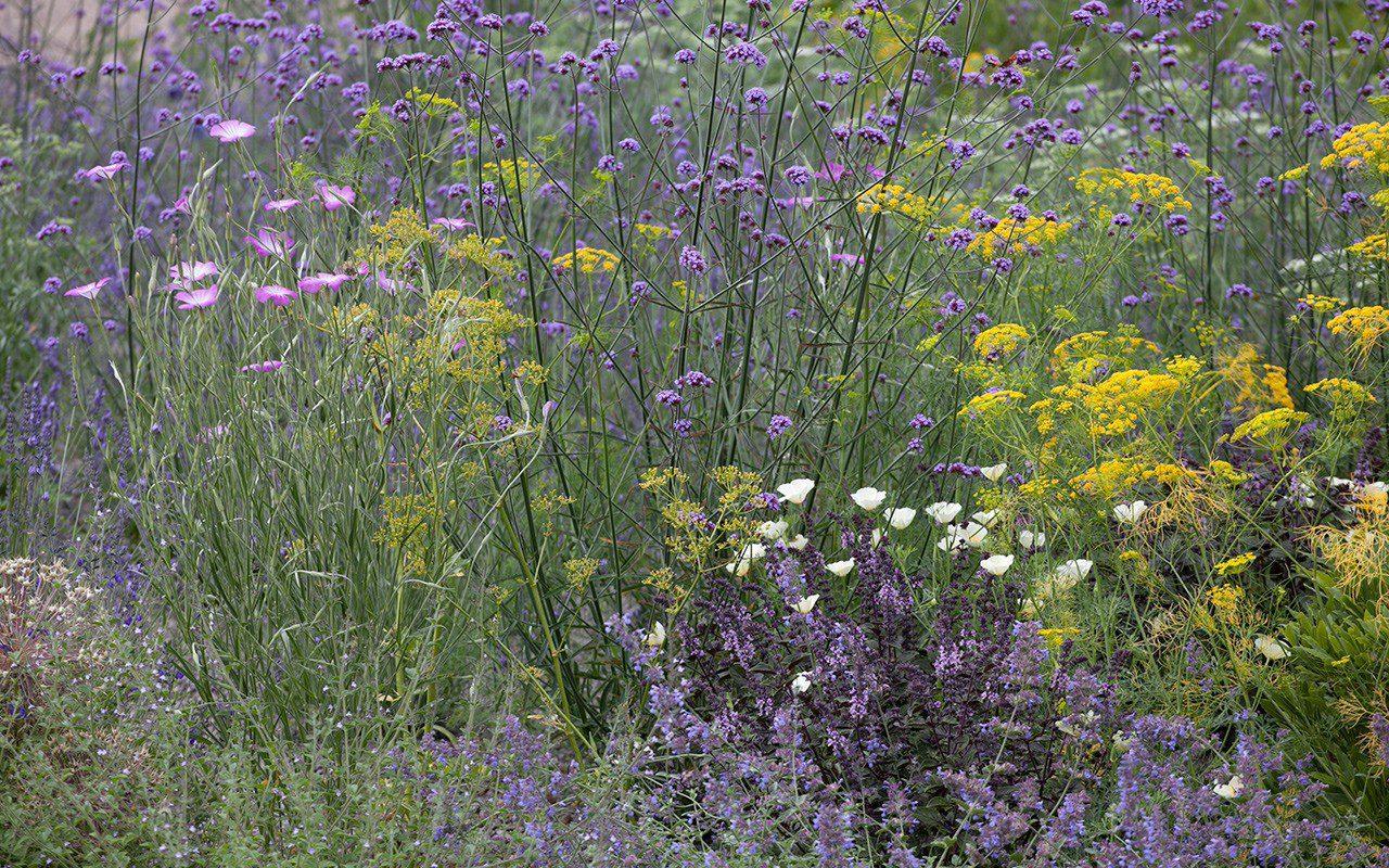 The Herb Garden at Dan Pearson's Somerset property. Photo: Huw Morgan