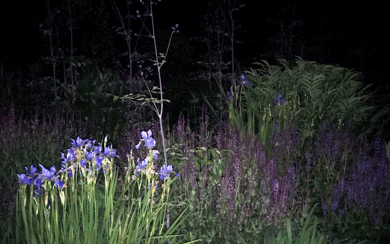 Dan Pearson's Somerset garden by night. Photograph: Huw Morgan