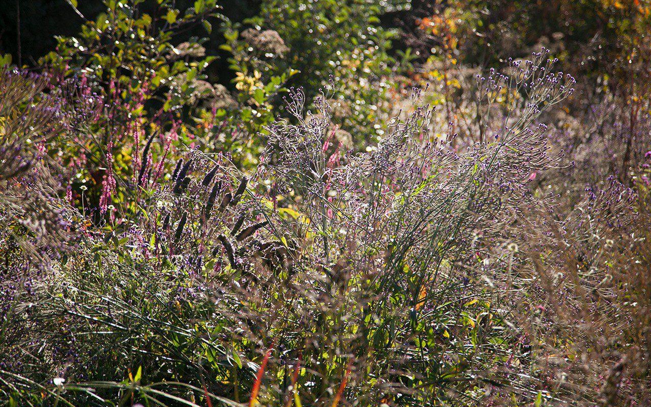 Agastache 'Blackadder', Verbena macdougallii 'Lavender Spires', Persicaria amplexicaule 'September Spires' in Dan Pearson's garden. Photo: Huw Morgan