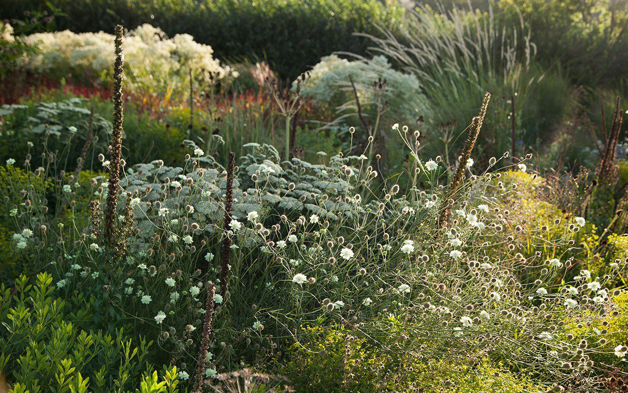 Dan Pearson's Somerset garden. Photo: Huw Morgan