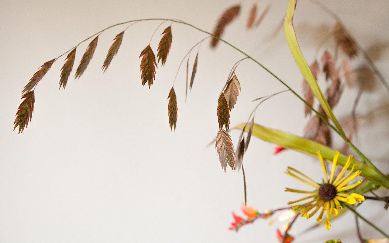 Chasmanthium latifolium. Photo: Huw Morgan