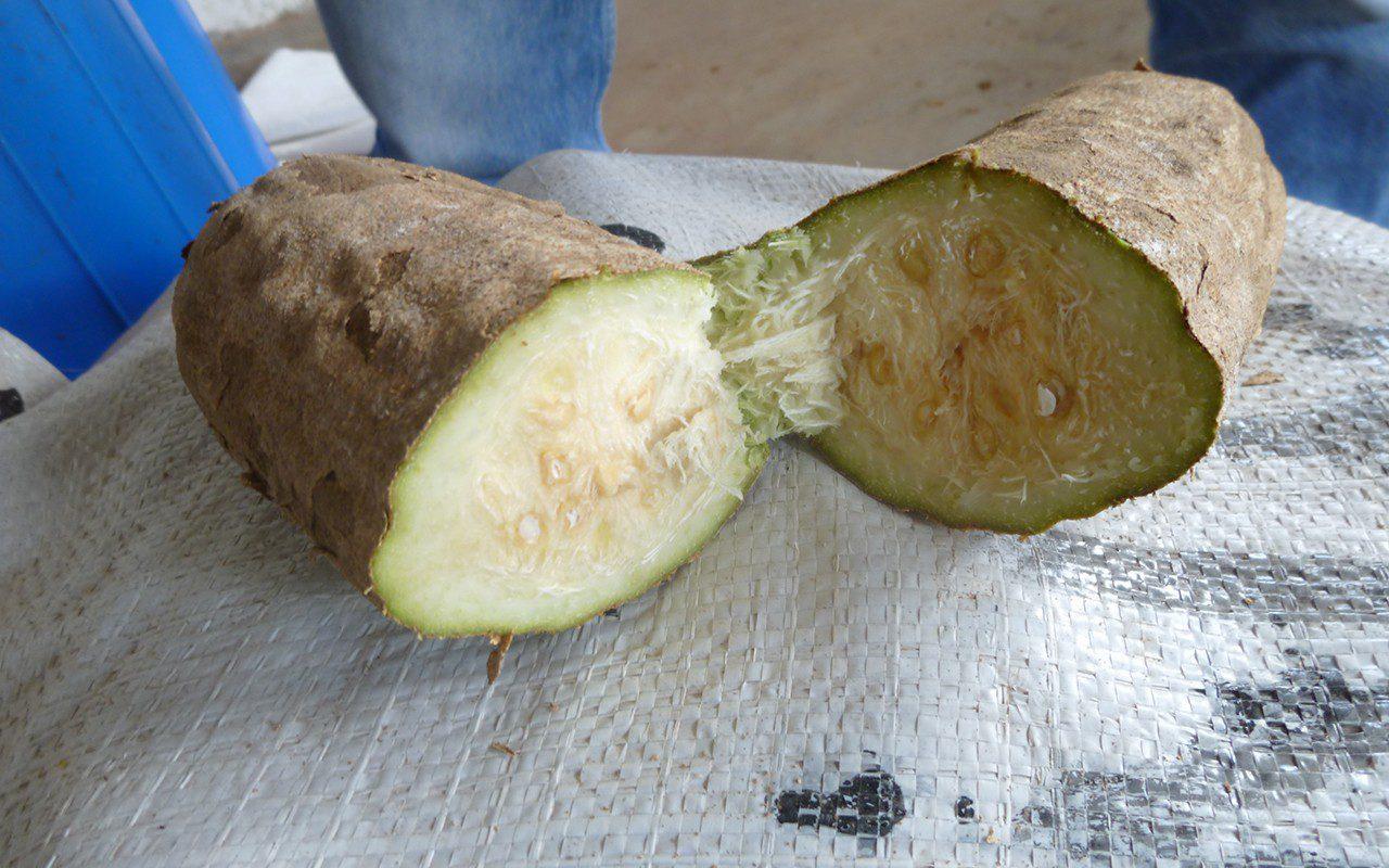 Kigelia pinnata fruit